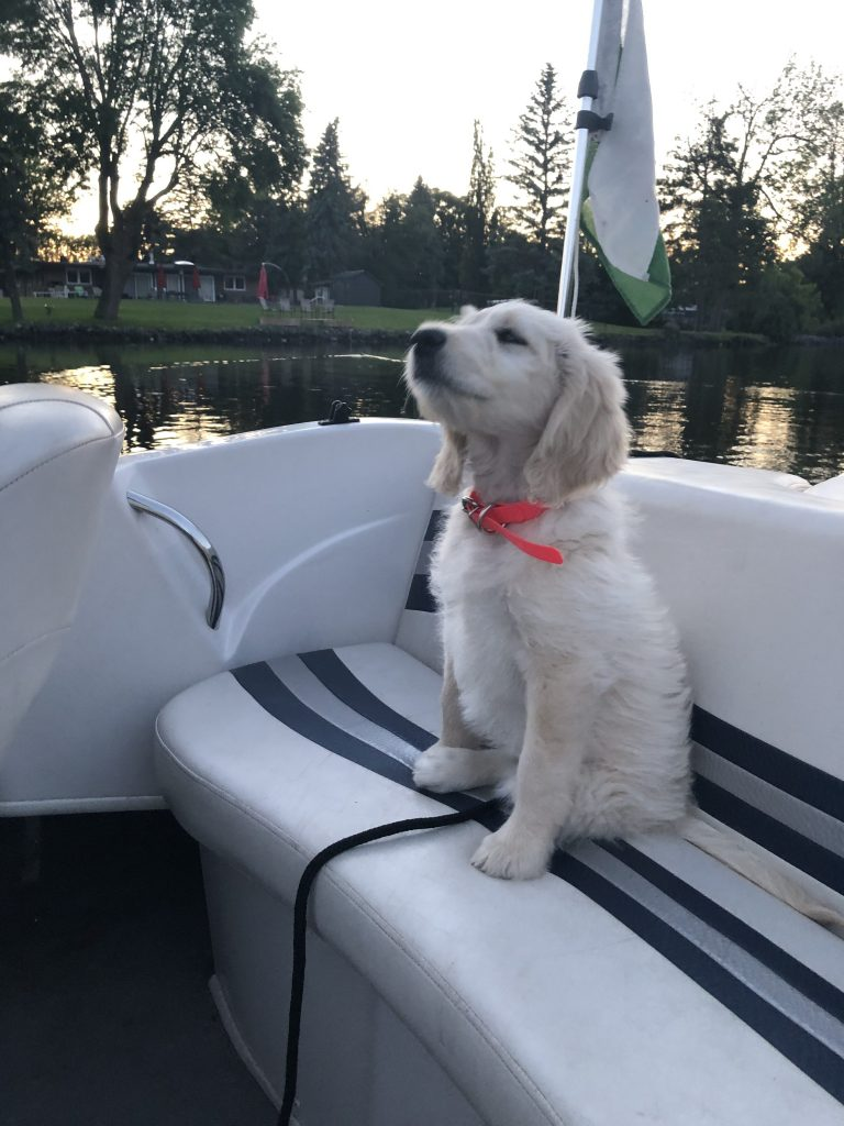 Lola at two months on her first boat ride