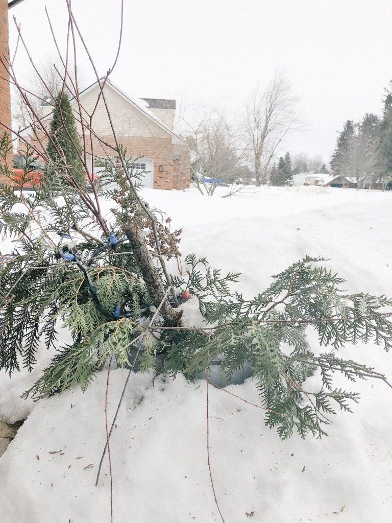 Decorative Planter in Snowbank