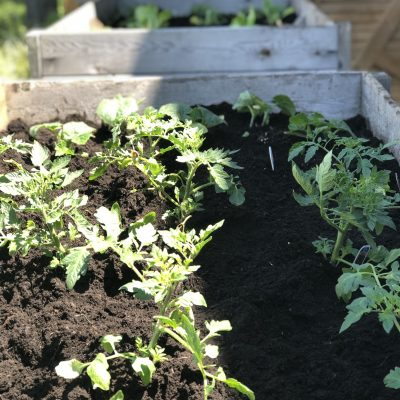 How Not To Plan  Raised Garden Boxes