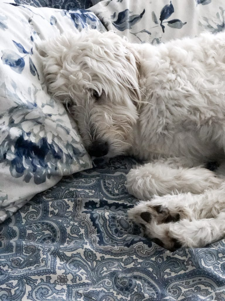 This is my bedding problem right here.  Lola and I need a solution for the wet and grit she leaves on our bed.