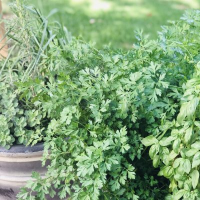 Preserving Herbs: Getting The Most From Your Crop